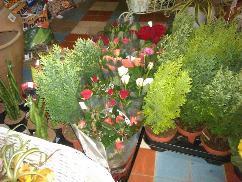 Ruže Kordana mix